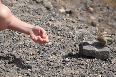 canary: Feeding a squirrel in Fuerteventura, Canary islands