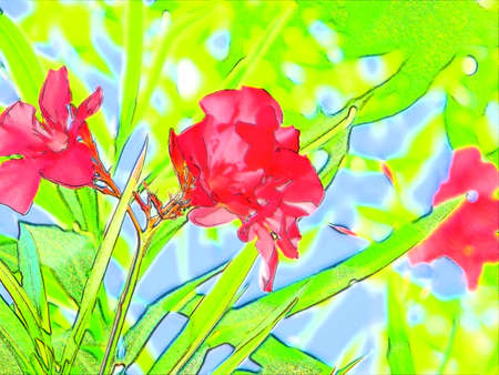 Oleander Cartoon