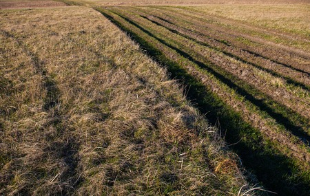 Countryside road overgrown with grass. Lots of wheel ruts. Stock Photo