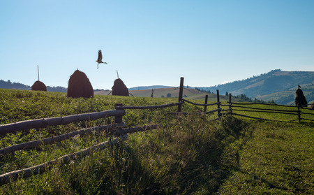 Wooden fence, haystacks and white storks in the Ukrainian Carpathian Mountains. photo