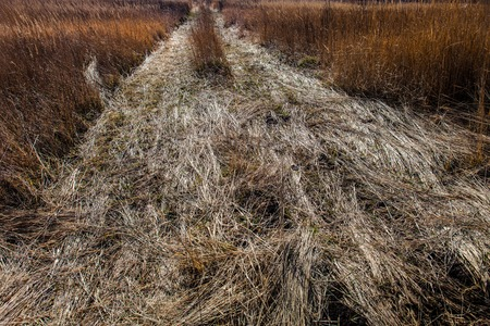 trampled: Field road with dry grass trampled by car wheels.