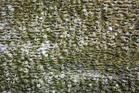 coquina: Superficie Coquina con textura rica y variada.
