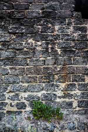 weed block: Brick masonry with green dandelion leaves underneath. Stock Photo