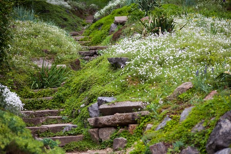 botanical garden: Stony stairs in the green blooming garden.