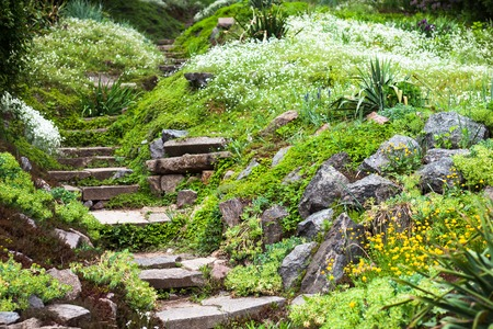 Stony stairs in the green blooming garden. photo