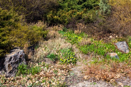 The path in the garden in early spring. photo