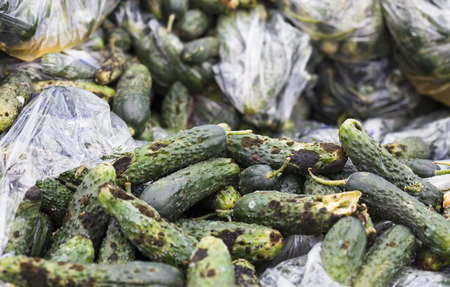 putrefy: Piles of rotten cucumbers on the landfill. Close up.