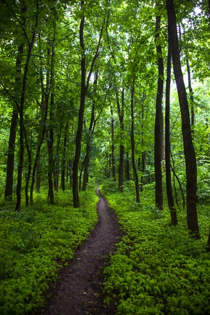The path in a green summer forest. photo