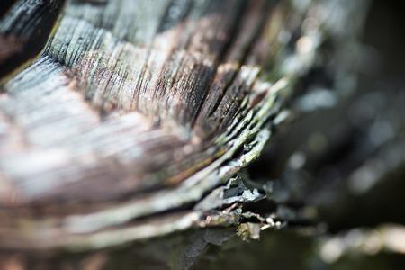 carcass: Metalen karkas van de verbrande auto-band. Dichtbij.