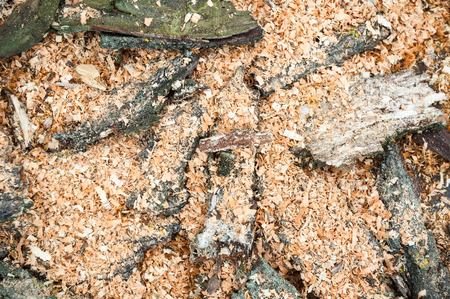 scobs: Pile of cut tree bark and wood sawdust. Stock Photo