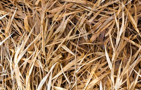 faded: Faded dry grass in autumn. Close up.
