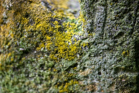 decedent: Moss-grown surface of the old stone cross. Close up. Stock Photo