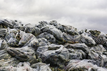 landfill: Rotten cucumbers in plastic sacks on the landfill. Stock Photo