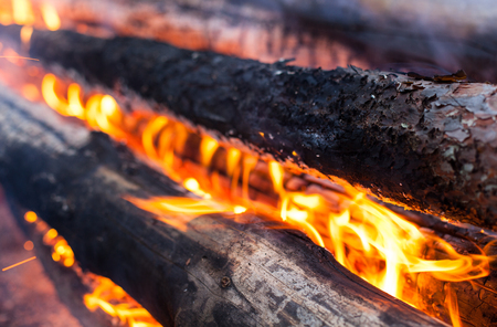 smolder: Burning logs in the bonfire. Close up.