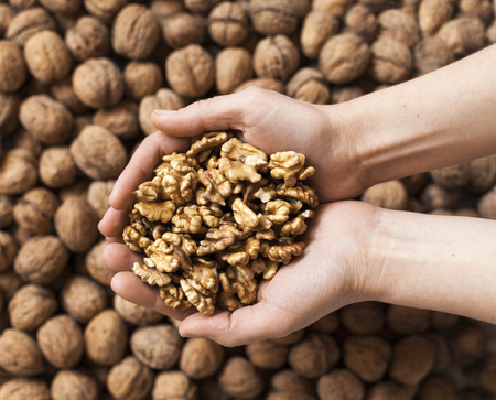 harvest organic: Handful of walnuts kernels against the walnuts in shell background Stock Photo