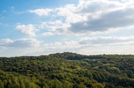 foliage tree: Forest at the beginning of the autumn. Ukrainian Bukovina region.