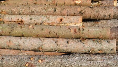 timber harvesting: Timber harvesting. Pile of cut fir logs. Close up.
