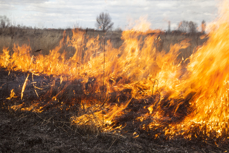 smolder: The big extensive fire in the field. Close up.