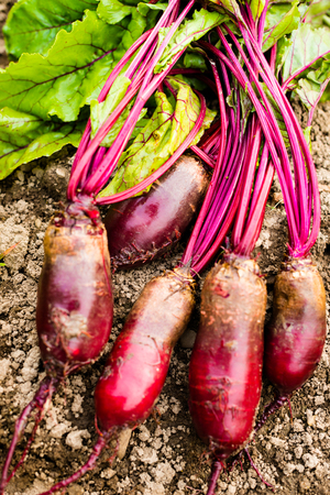 Beetroots (Beta vulgaris) on the ground. Close up.