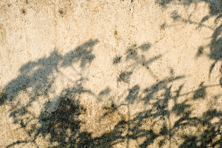 Shadows of the plants on the old concrete surface in the summer day. Stock Photo