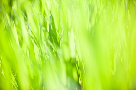 Bright green grass in the sunny day. Close-up.