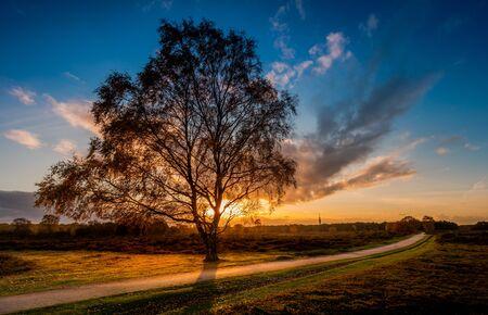 Birch in the sunset Stock fotó