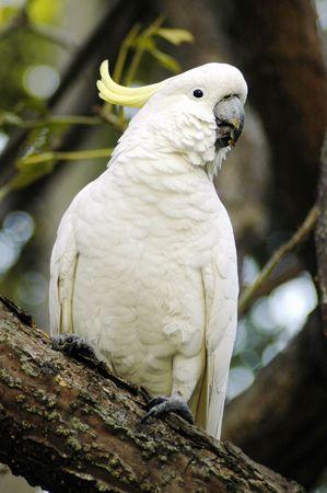 white parrot sitting on a limb photo