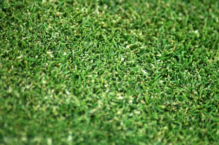 blurring: green dry grass, distance blurring, detail photo