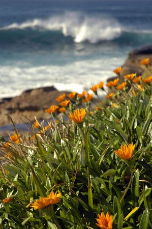edge of cliff: nature scenery, orange flowers in front of brown rocks, water behind edge cliff, blurred white wave coming closer Stock Photo