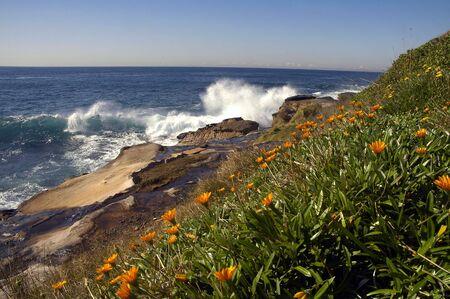 c�te � Sydney, orange fleurs, des rochers et des oc�ans