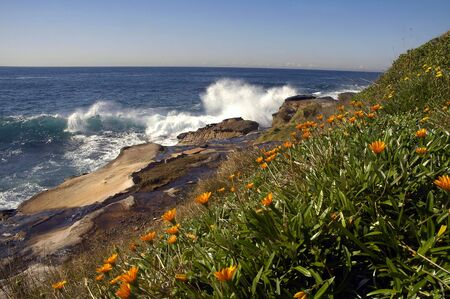 coastline in Sydney, orange flowers, rocks and ocean Stock Photo