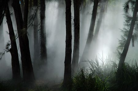 white thick mist in dark forest, photo taken in canberra, australia Stock Photo