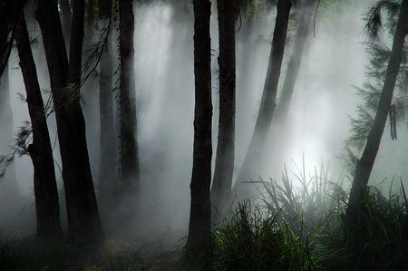white thick mist in dark forest, photo taken in canberra, australia Stock Photo