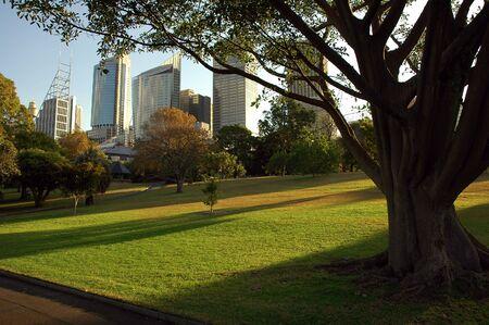Royal Botanic Gardens � Sydney, gratte-ciel en arri�re-plan, le soir