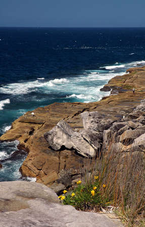 rocky ocean coastline, yellow flowers in foreground, Stock Photo - 1327563