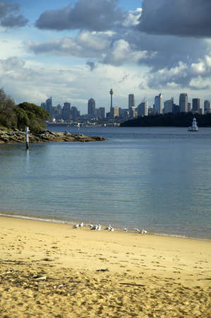 Sydney CBD in distance, Sydney Tower visible, beach with seagulls in foreground, photo