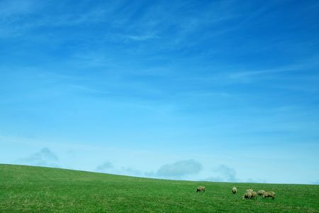 nature background with clear blue sky, green grass and several sheep photo