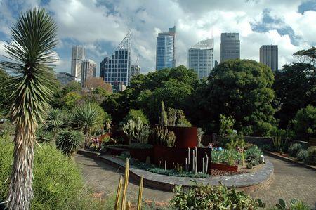 botanic: Sydney CBD from Royal Botanic Gardens, cloudy sky