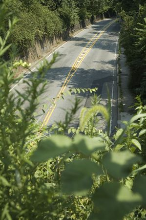 photo of an empty road surrounded with foliage,  Stock Photo - 3498040