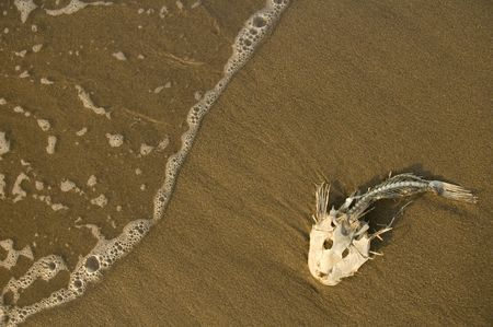 dead fish bones stranded on sand, ocean water Stock Photo - 4005800