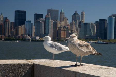 ellis: two sea gulls on ellis island, new yorks manhattan in background