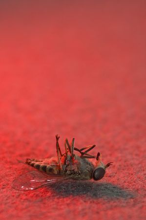attacker: dead horsefly on red background, vertical photo Stock Photo