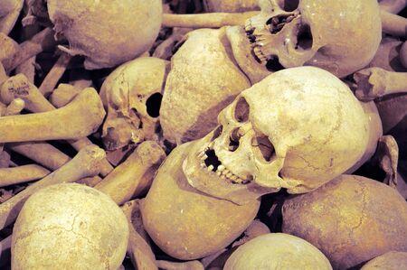 several old real human skulls and bones photo