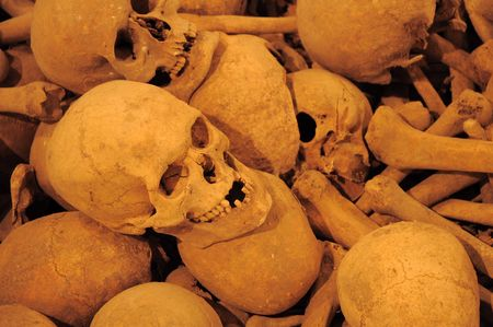 several ancient skulls and bones, horizontal photo photo