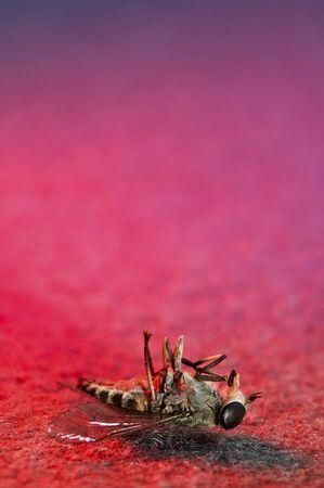 horsefly: dead horsefly