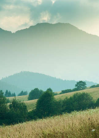 dominant color: vertical photo of hills and meadows. dominant green color  Stock Photo