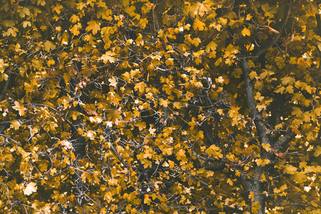 Yellow leaves branches bush of autumn landscape