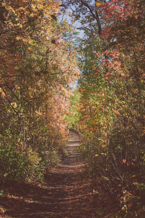 The road in the wood, the autumn wood. A photo in sunny day Foto de archivo