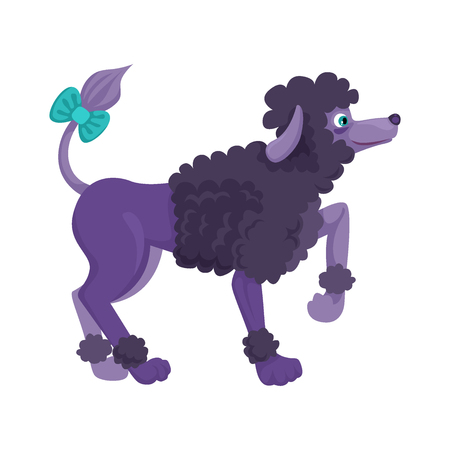Purple dog, boy Poodle breed. Curly sheared wool. Caring for animals, decoration bansta on the tail. Paw raised.