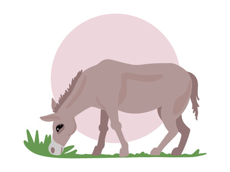 Brown donkey, a hoofed animal grazing in a pasture. Horse for a walk. Vector Isolated Object